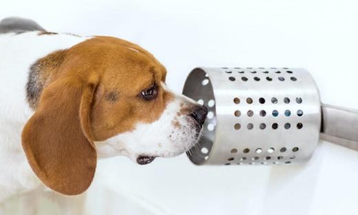 뛰어난 후각으로 암을 진단하는 '암 진단 개(Cancer Sniffing Dog)'