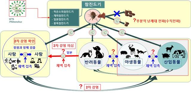 그림 15. 중증열성혈소판감소증후군 바이러스의 자연계순환 예측 및 전파 양상