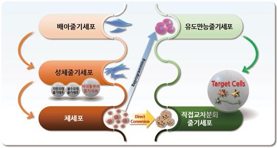 그림 1 줄기세포의 분류