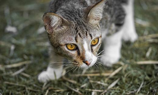 190726 wildcat
