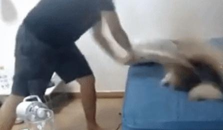 문제가 된 반려견 학대 논란 영상 캡쳐