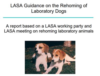 한국 실험견 분양 가이드라인의 초석이 된 LASA 가이드라인