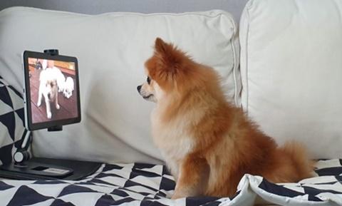 20190905happydogTV