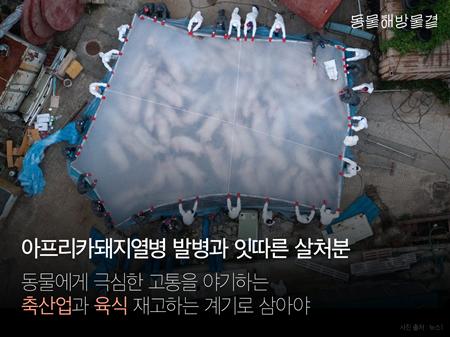 20190919asf_donghaemul1