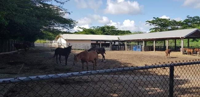 Large Animal Farm 말들은 그레나다의 따가운 햇빛을 피해 그늘에서 하루를 보낸다