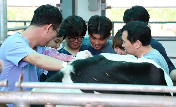 평창 산업동물임상교육연수원에서 실습교육을 지도하는 장구 교수(오른쪽 맨앞)