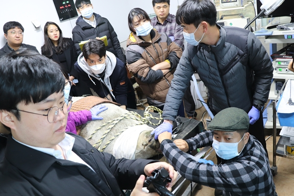 호흡마취 후 위내시경 검사와 치과진료가 진행됐다.