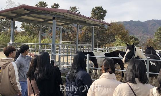 20191106gs_kra_horse1