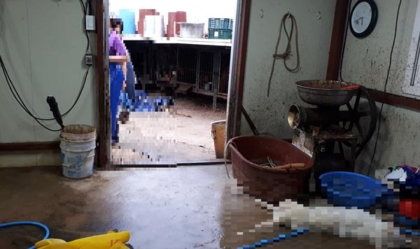 전기꼬챙이로 개를 불법 도살하다 적발된 업체 (사진 : 경기도 특사경)