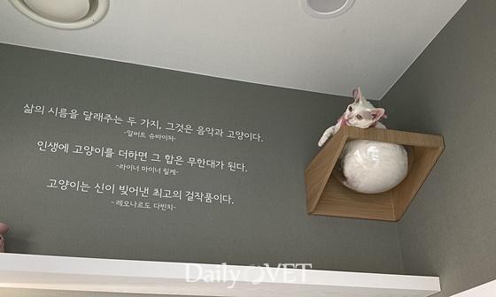 김민 원장의 5마리 고양이 중 하나인 '멍게' 모습