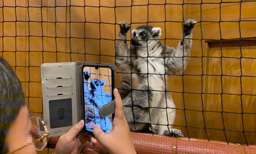 캐니언파크의 알락꼬리여우원숭이 전시 상태 @어웨어·곰보금자리