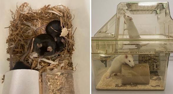 (왼쪽) 마우스에게 둥지는 몸을 숨길 수 있게 해주며 체온 유지에 도움이 된다 (오른쪽) 래트의 더블 레커 케이지는 탐색활동을 늘려줄 수 있다 (자료 : 동물을 위한 행동)