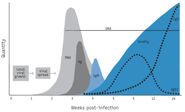 그림3. Retrovirus인 인간면역결핍바이러스(HIV) 감염 시 혈액 내 항원과 항체의 변화³ 그림3에서 감염 후 바이러스혈증이 되면 바이러스의 RNA나 코어 단백질(항원)을 검사함으로써 병원체를 측정할 수 있게 된다.  이후에는 면역글로불린(Immunoglobulin, Ig) 중 초기 면역에 관여하는 IgM이 먼저 증가하였다가 후에는 IgG가 증가하게 되는데, 항원은 측정되지 않고 항체만 측정되는 시기에도 간접적으로 병원체 감염을 확인할 수 있게 된다.  다만, 백신 등 인위적인 항원 주입이 있었는지 고려하여 결과를 해석해야 한다.