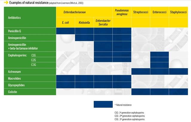 (자료출처 : Biomerieux 핸드북; Antimicrobial Susceptibility Testing: performance of in vitro antimicrobial susceptibility testing of bacteria and fungi)