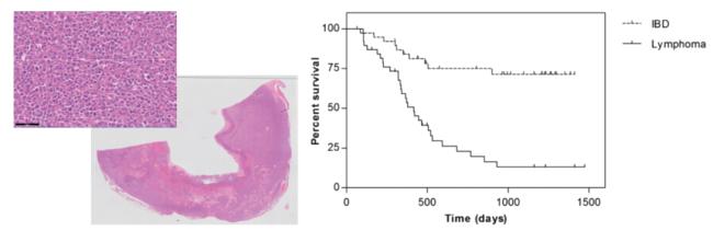 그림4. (왼쪽) 장관림포마로 확진된 장관 종괴의 조직 biopsy 검사 결과.  (오른쪽) 만성 장 질환을 가진77마리의 고양이에서 PARR검사를 통해 진단한 IBD와 림포마 환자 간의 생존 그래프.